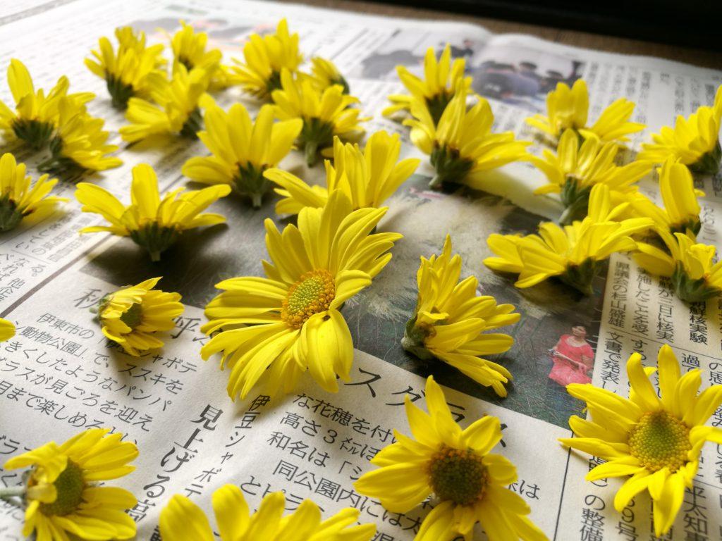 新聞紙に菊
