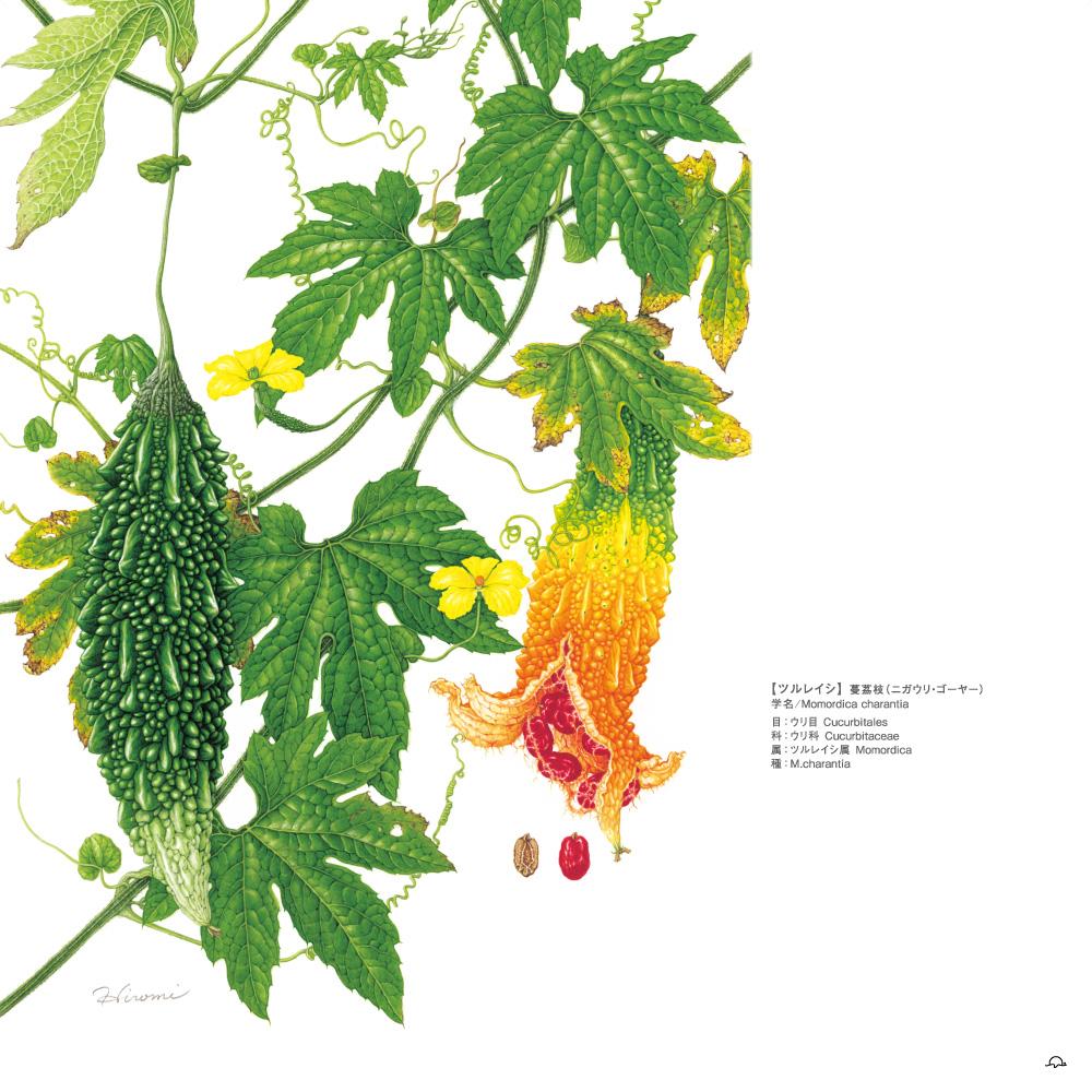 鳥居ひろみボタニカルアート─町角の植物図鑑ゴーヤー