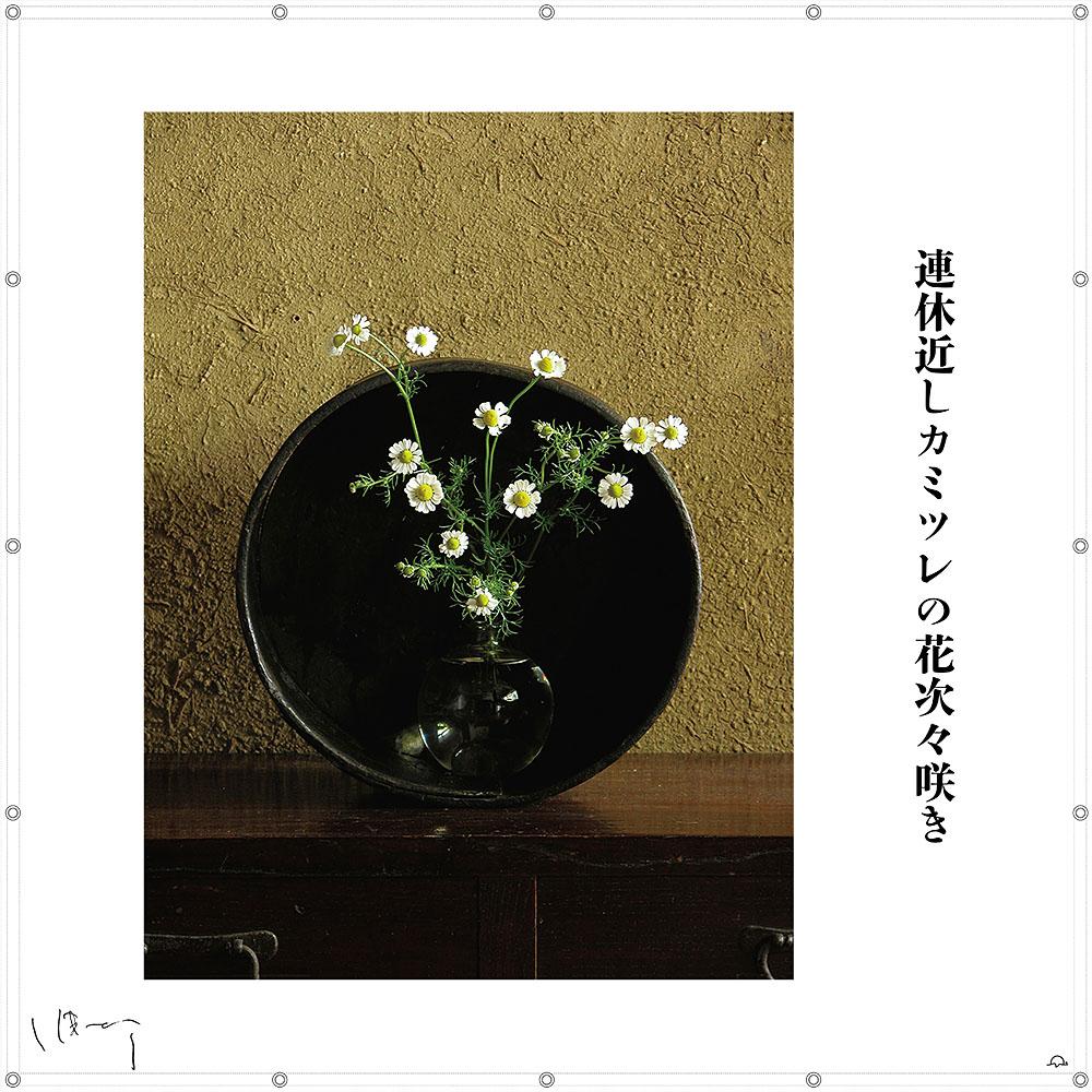 味岡伸太郎花頌抄 14月(カミツレ)