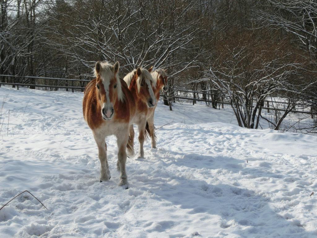 雪のなかに馬