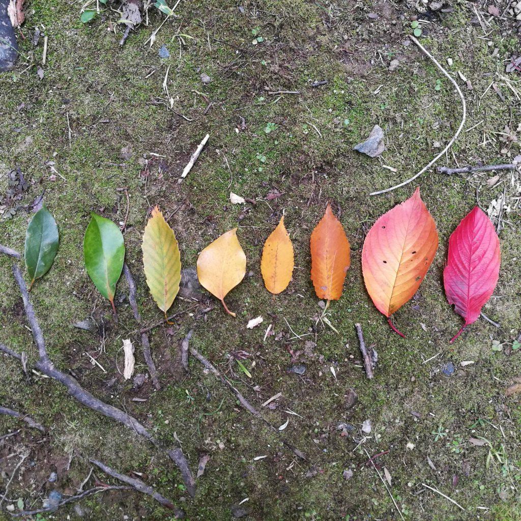 紅葉と枯葉の落葉