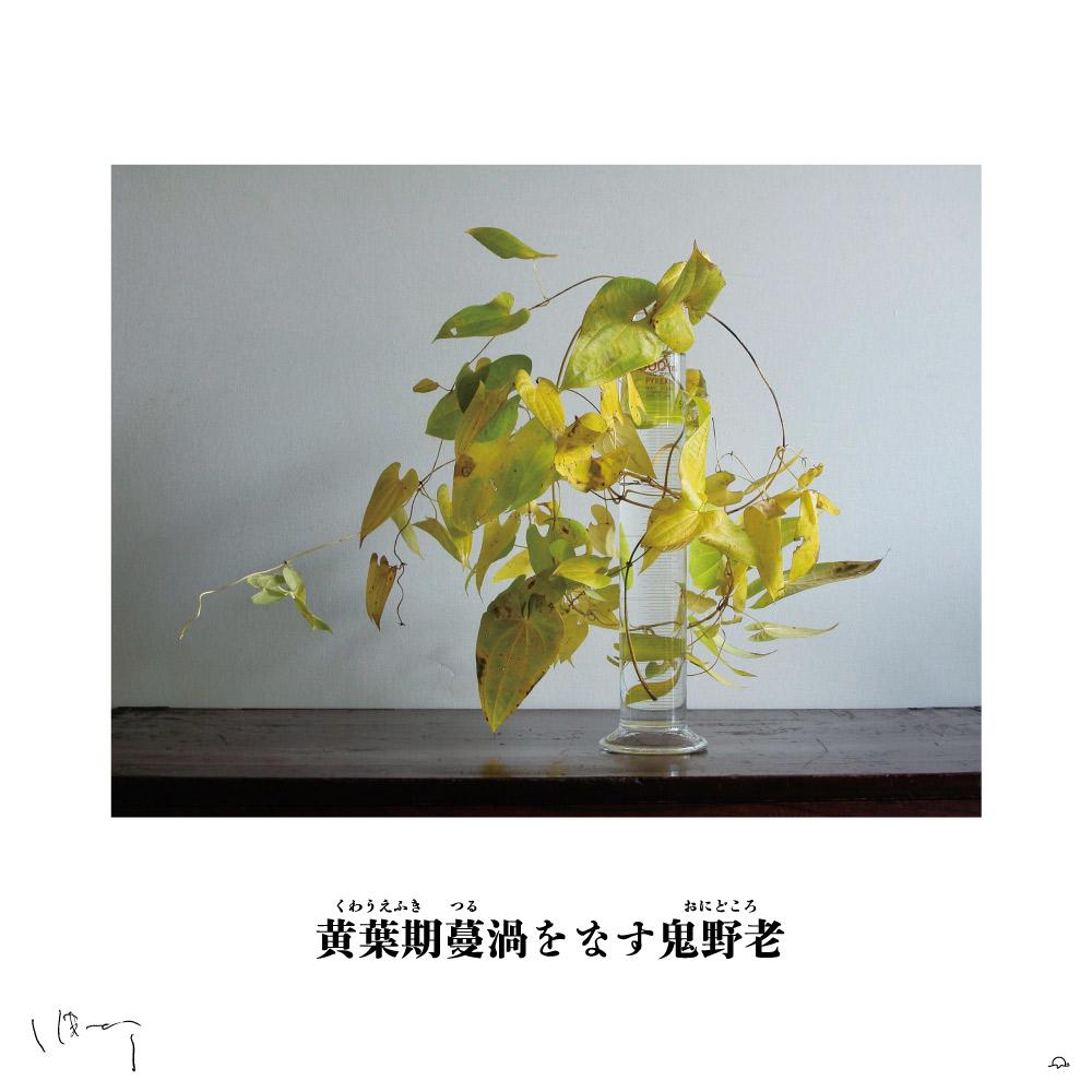 味岡伸太郎花頌抄2 11月(鬼野老)