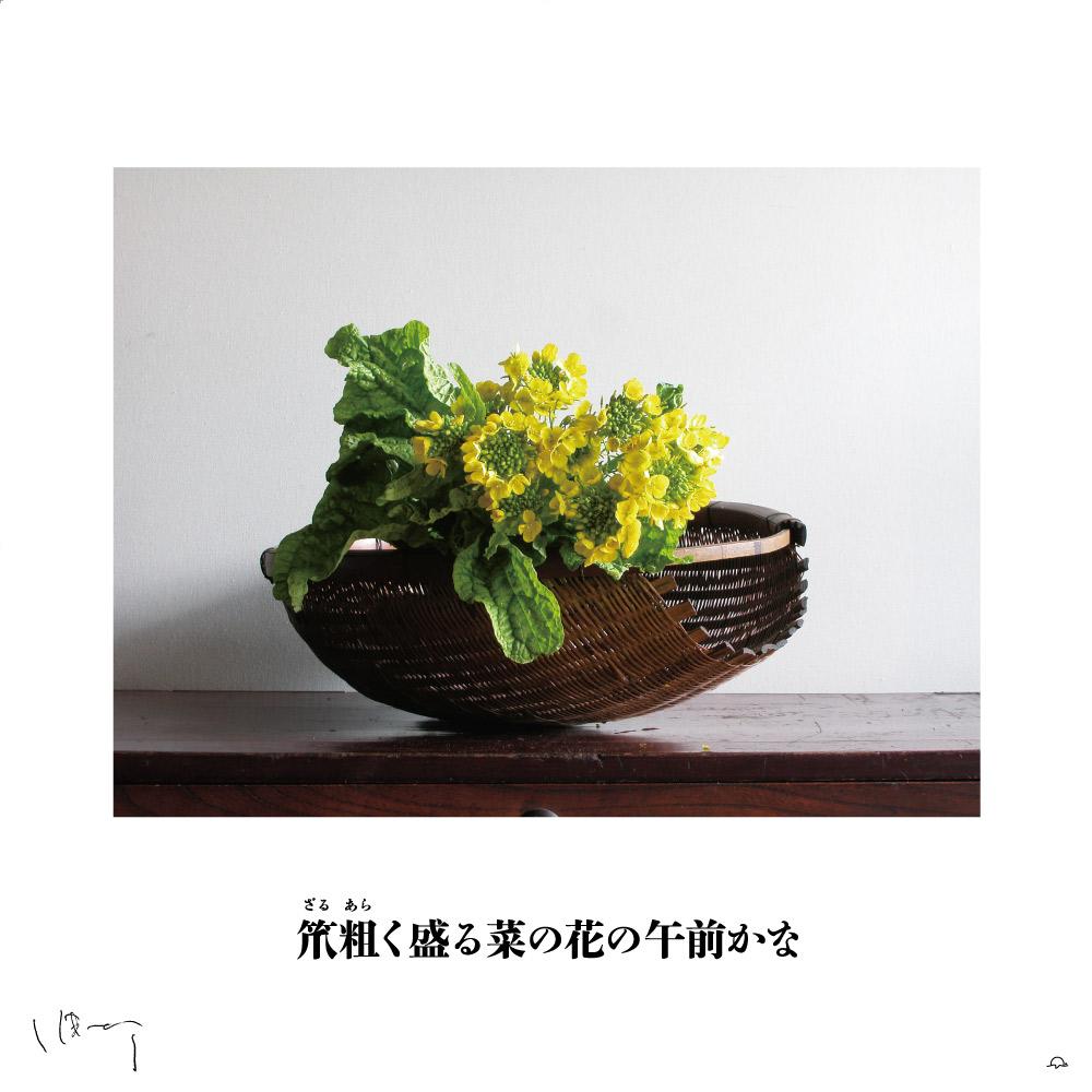 味岡伸太郎花頌抄3(3月菜の花)