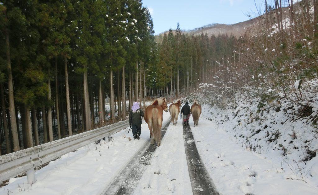 雪のなか馬の移動
