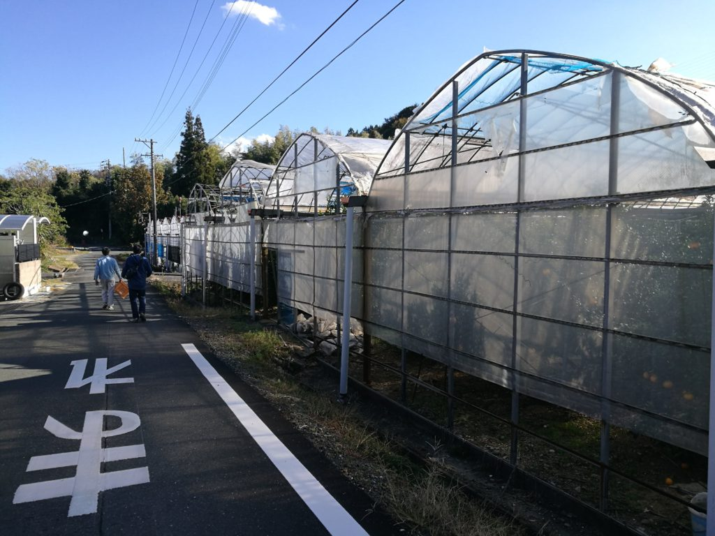 細江町のみかん畑