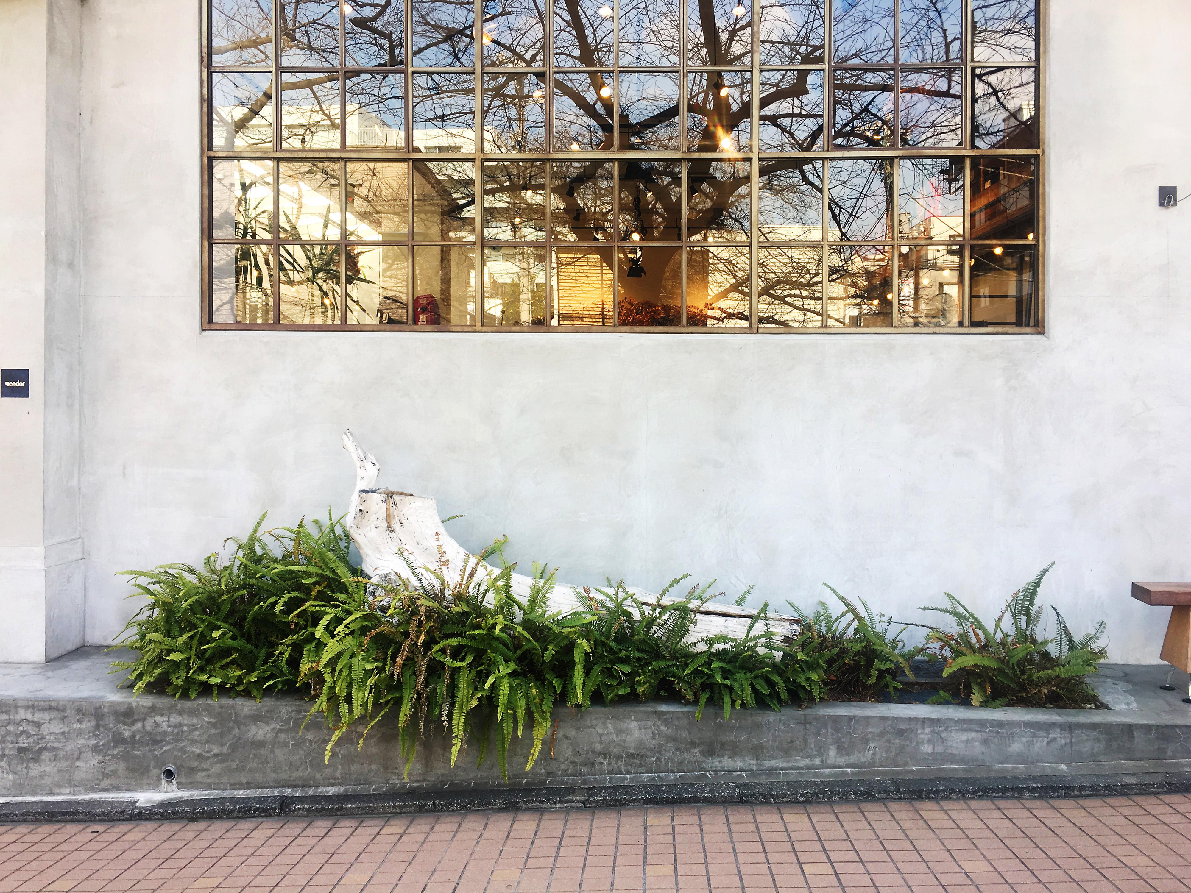 色彩のフィールドワーク:もてなす緑色彩計画家・加藤幸枝 中目黒の桜が映り込む窓