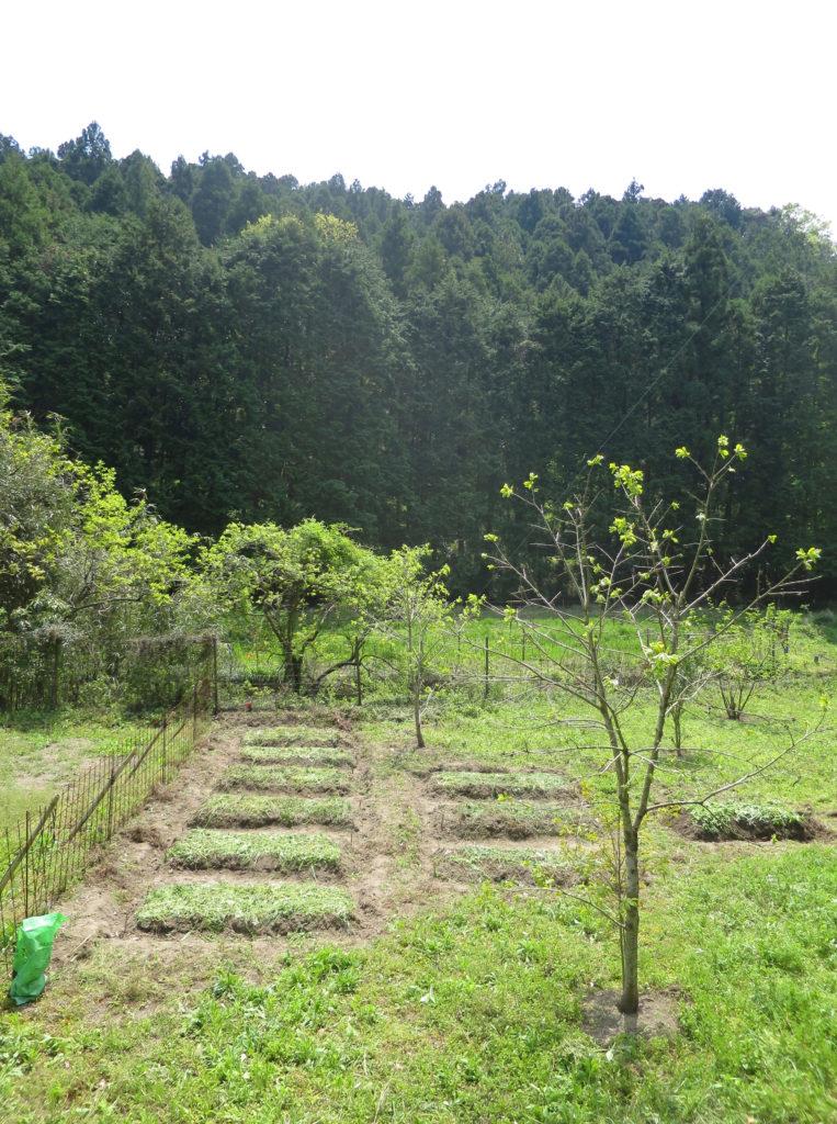 畑の畝、休耕畑の高畝