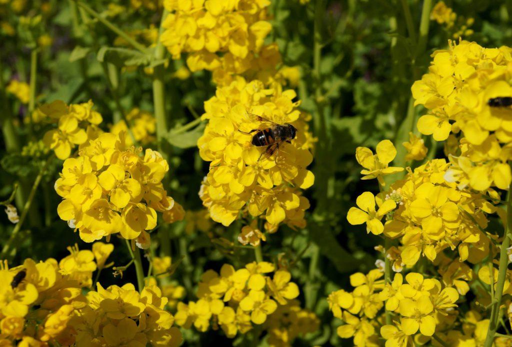 蜂の姉妹や濡れ翅のこすれあふ