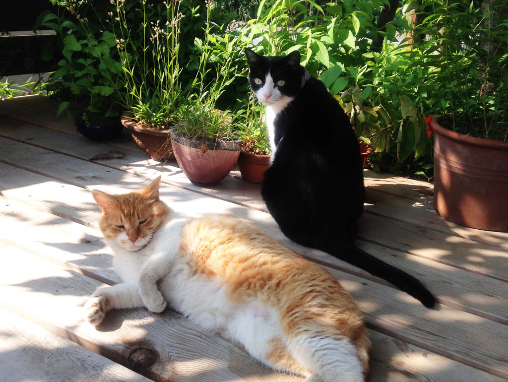 永田花_我輩は歌丸である。第6話 猫 cat 日向ぼっこ 日なたぼっこ ガーデニング