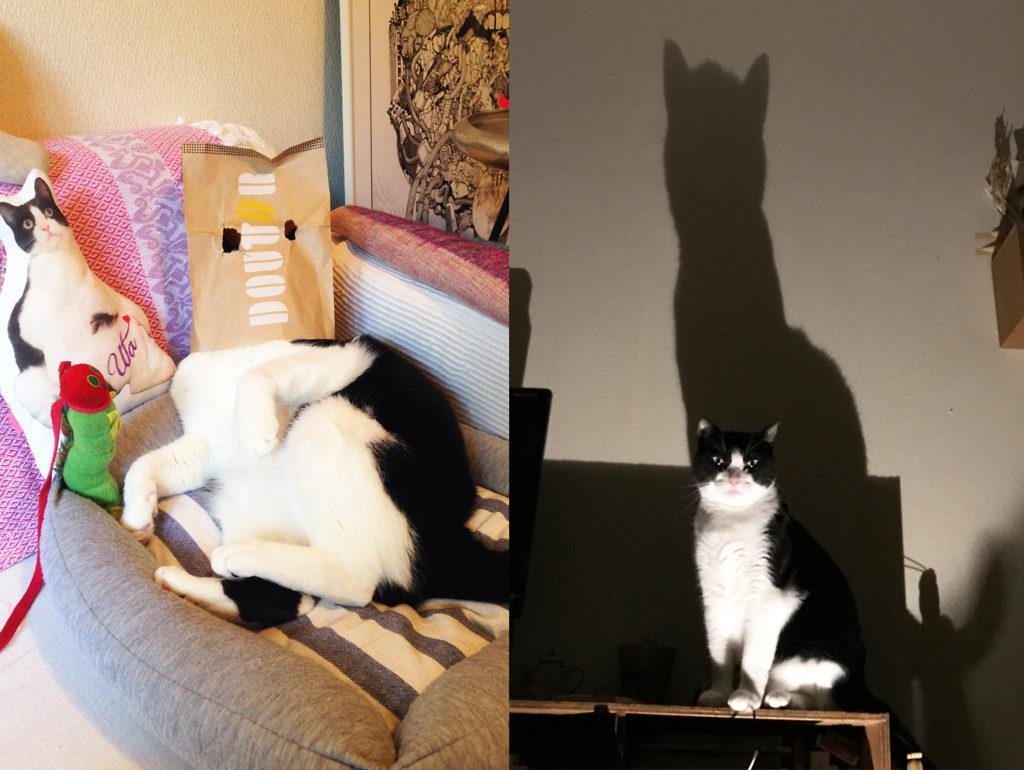 永田花ハチワレ猫紙袋をかぶる猫Cat to wear a paper bag