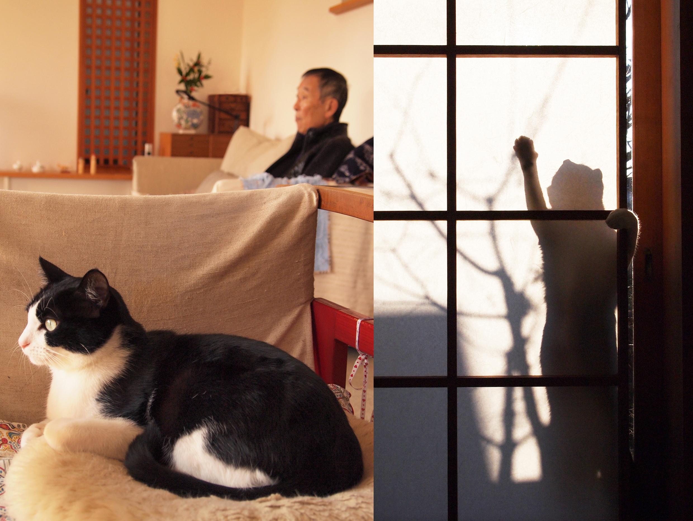 el arquitecto y el gato
