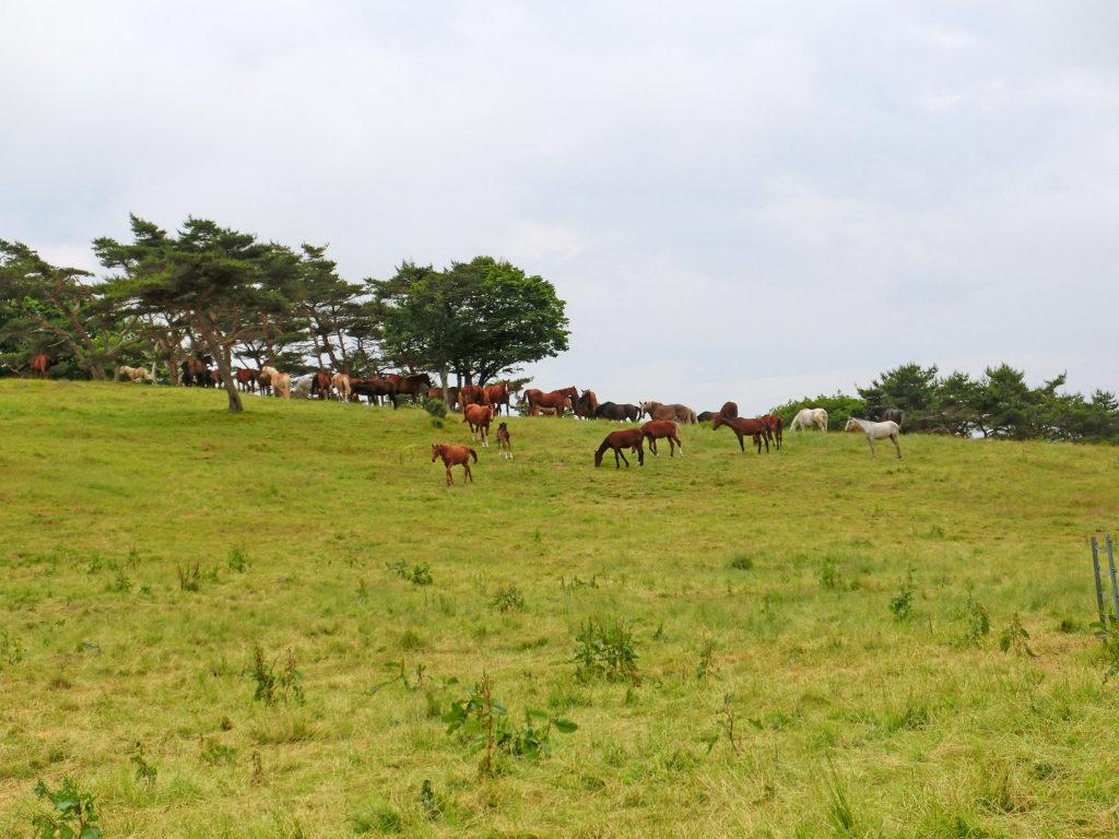 高原でくつろぐ馬たち