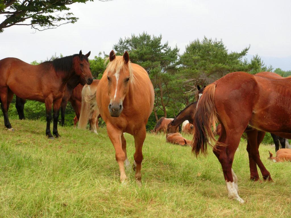 遠くに飼い主を見つけてよってくる馬