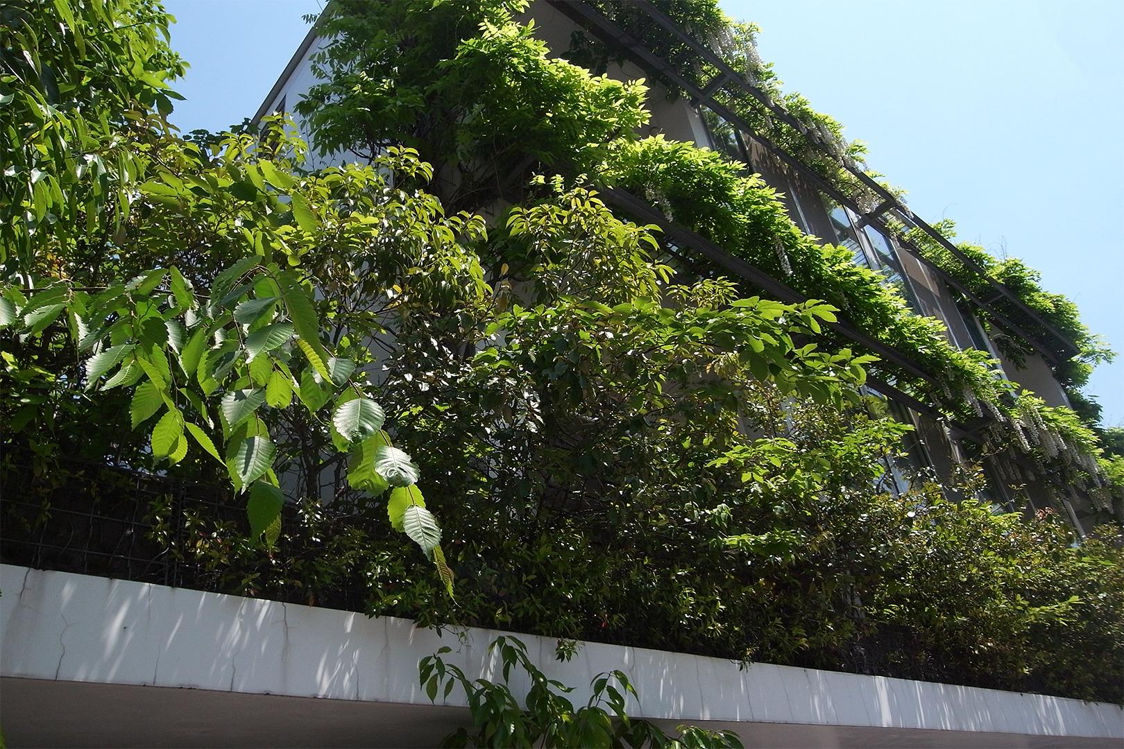 重なる緑。最上階にシロバナヤマフジ