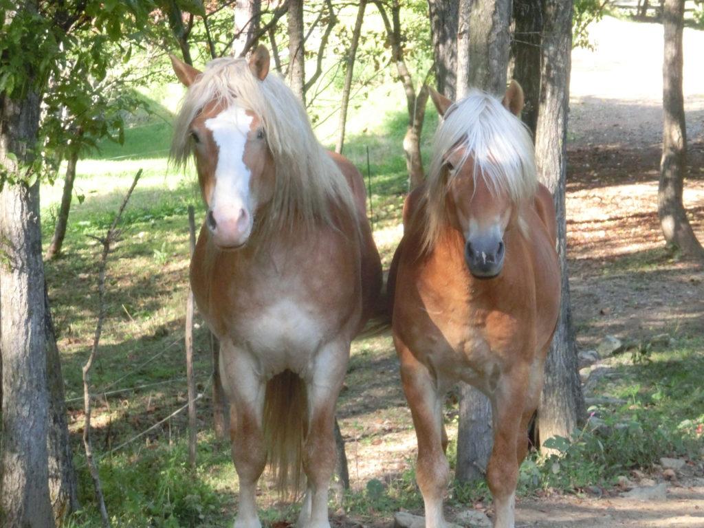 遠野クィーンズメドウ・カントリーハウスの馬