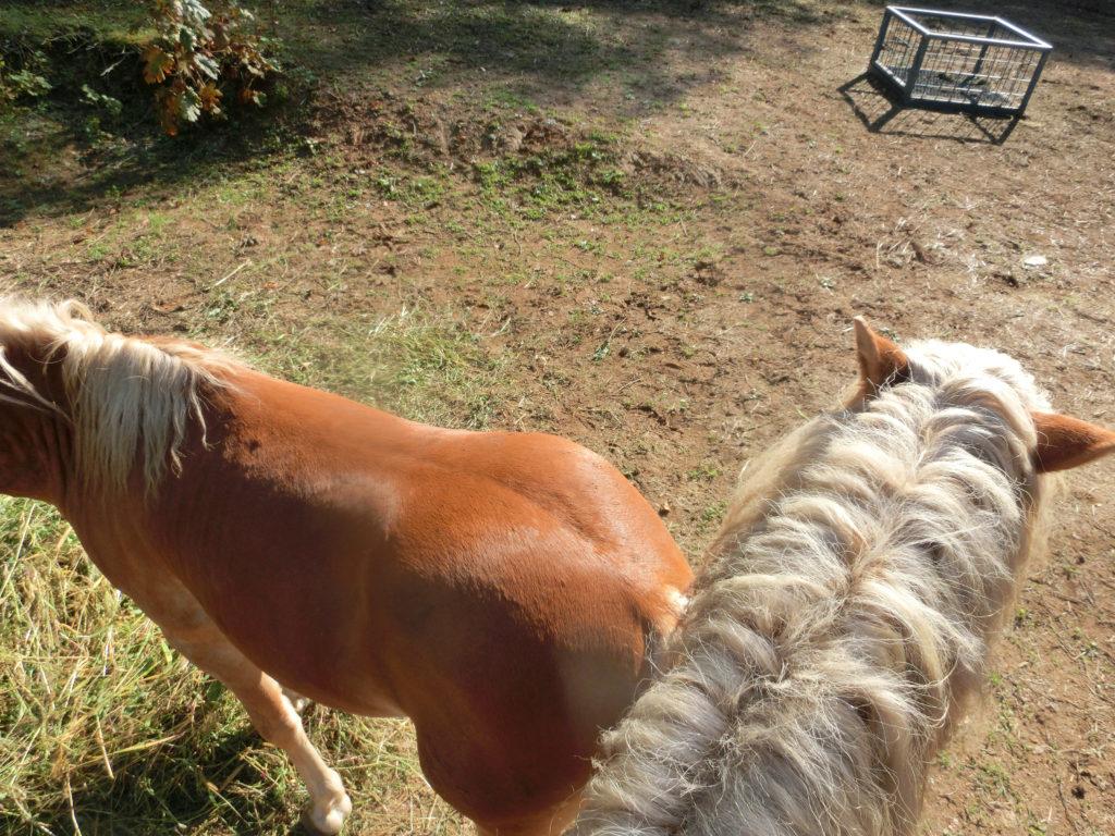 馬のたてがみ
