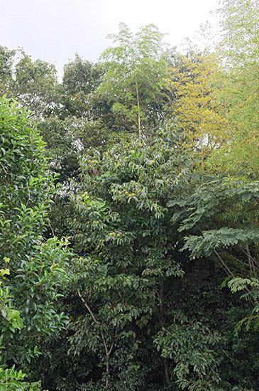 放置された雑木林