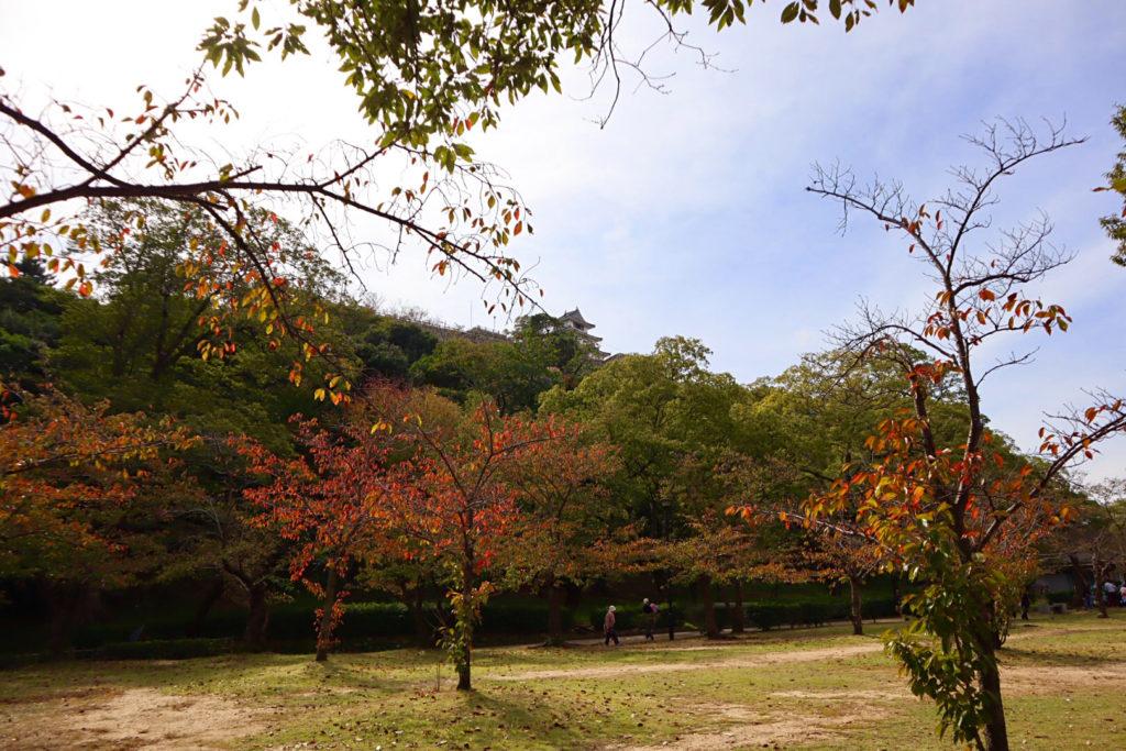 亀山公園の紅葉