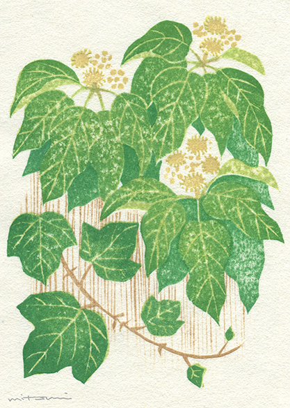 里山の色木蔦(きづた)