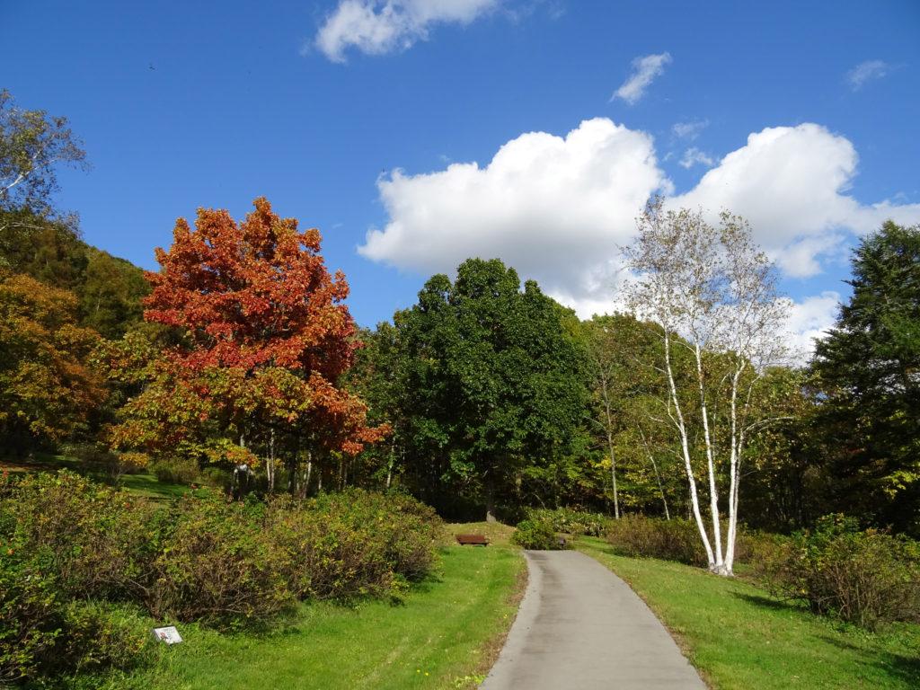 ばら園の散策路