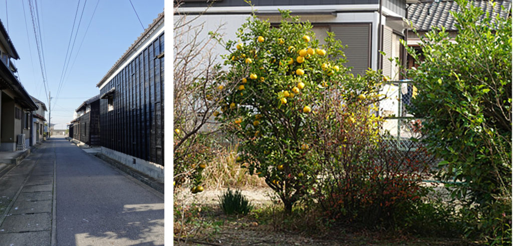奥まった小道と橘の木