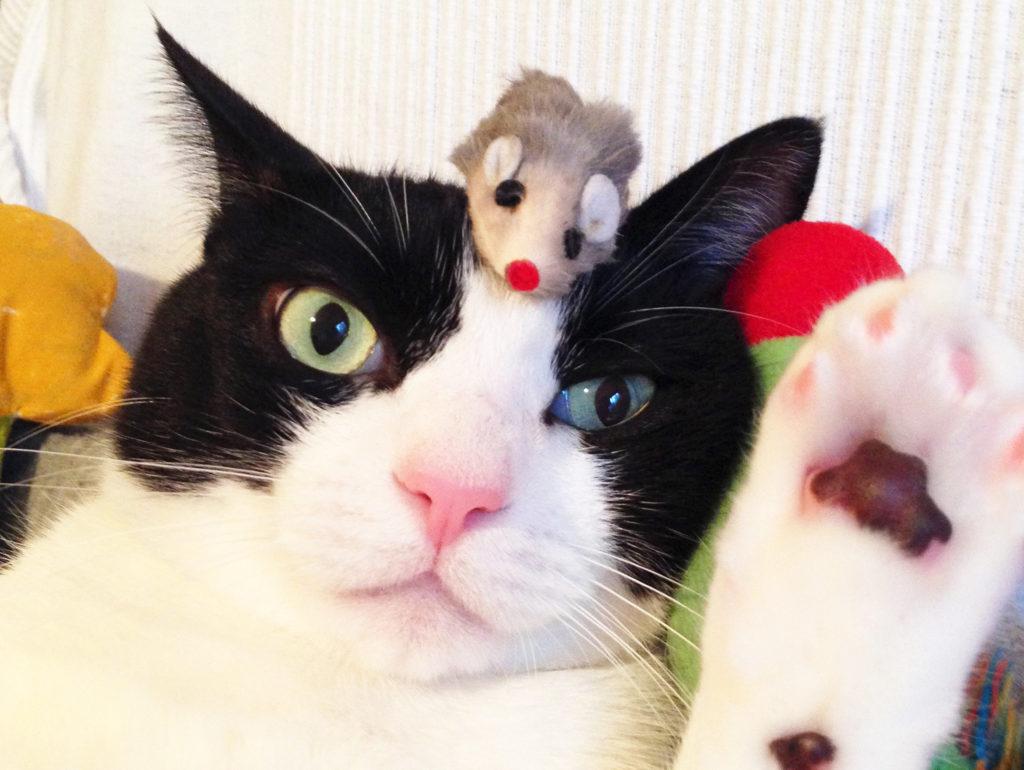 オードリー春日の真似する猫