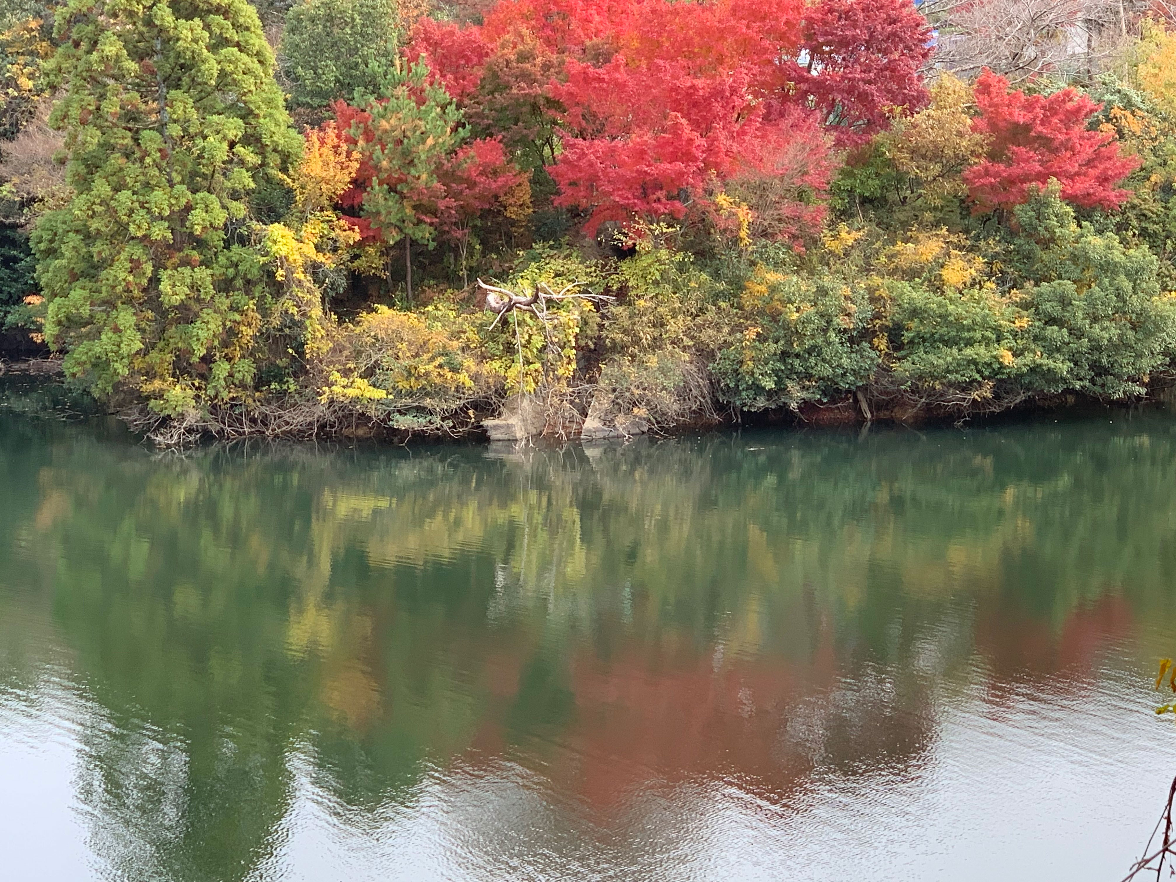 多田グリーンハイツの池