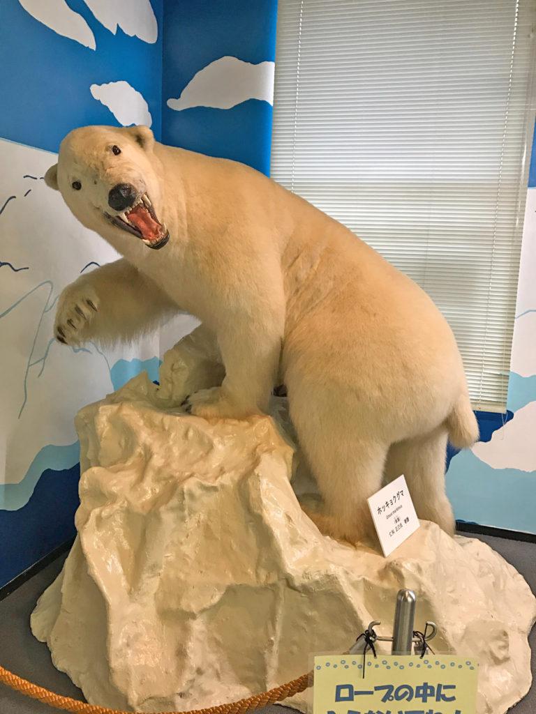 倉敷自然史博物館のシロクマの剥製