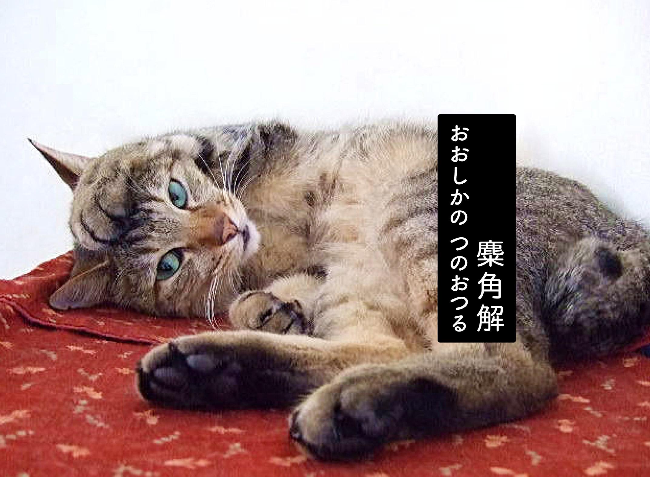 頭に手を置く猫