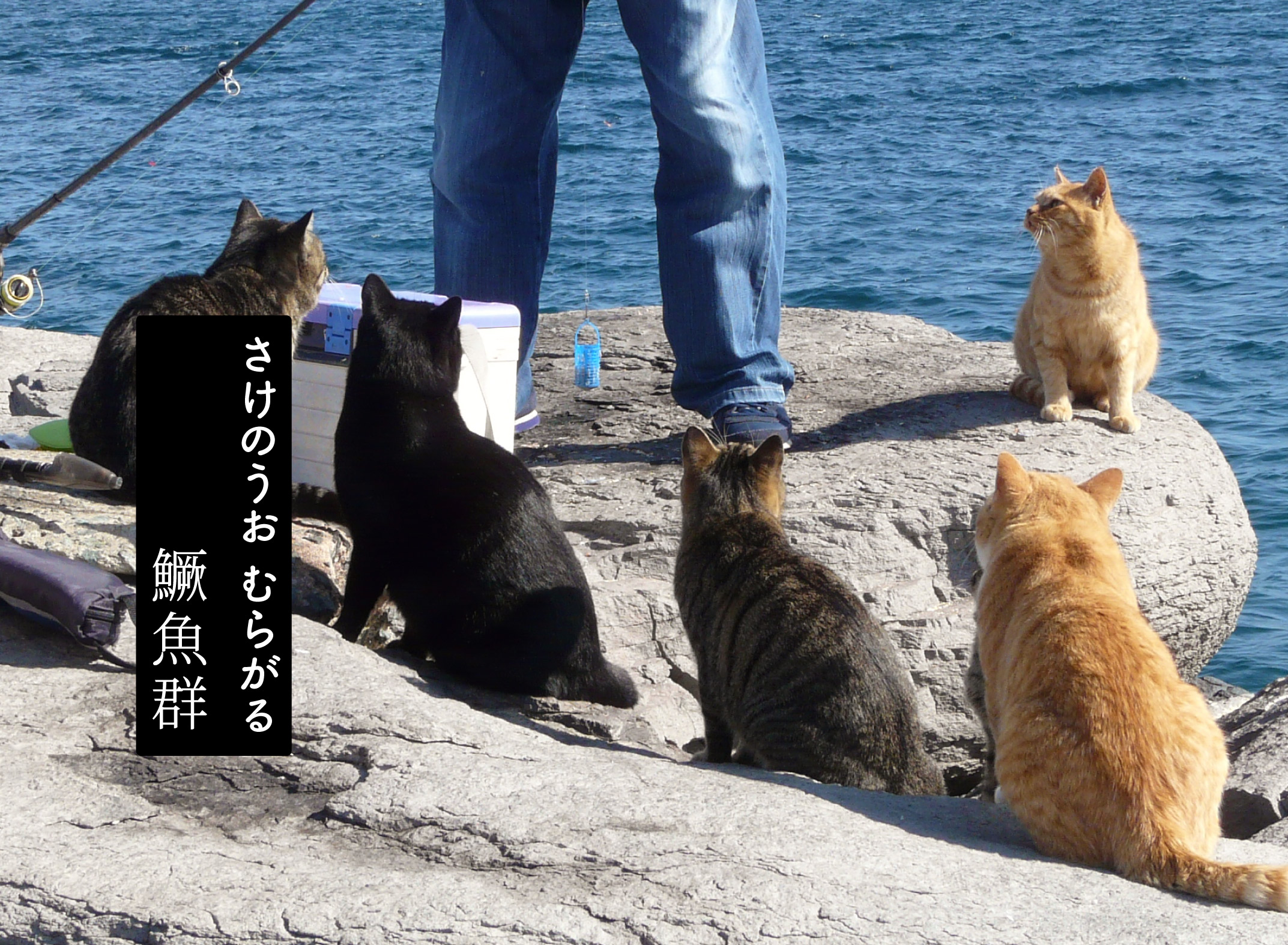 魚を狙う猫