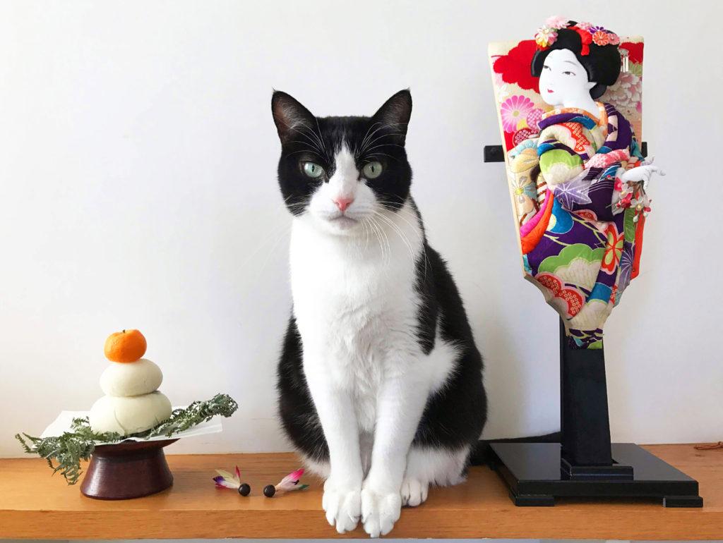 ハチワレ猫と羽子板