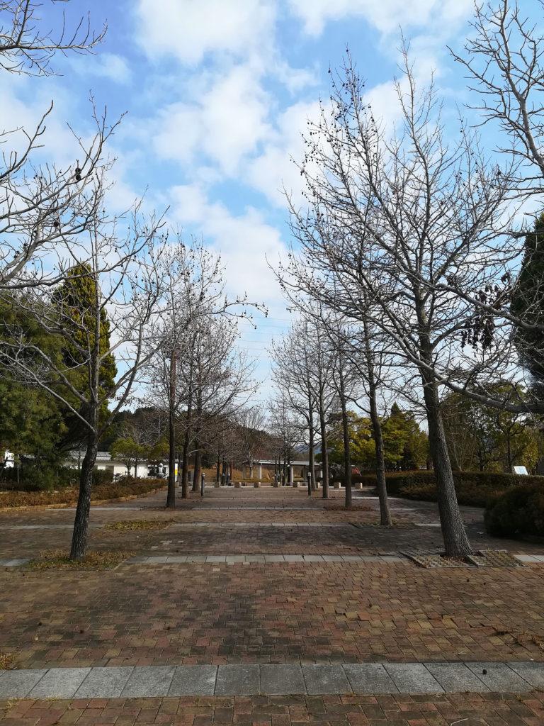 古賀市の並木道