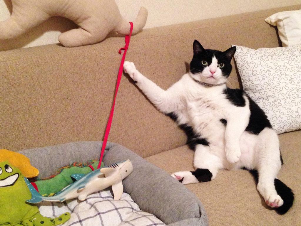 猫は獣だと言う事を淡々と語るハチワレ猫の歌丸