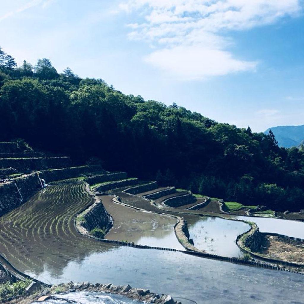 島根県の田植え後の棚田
