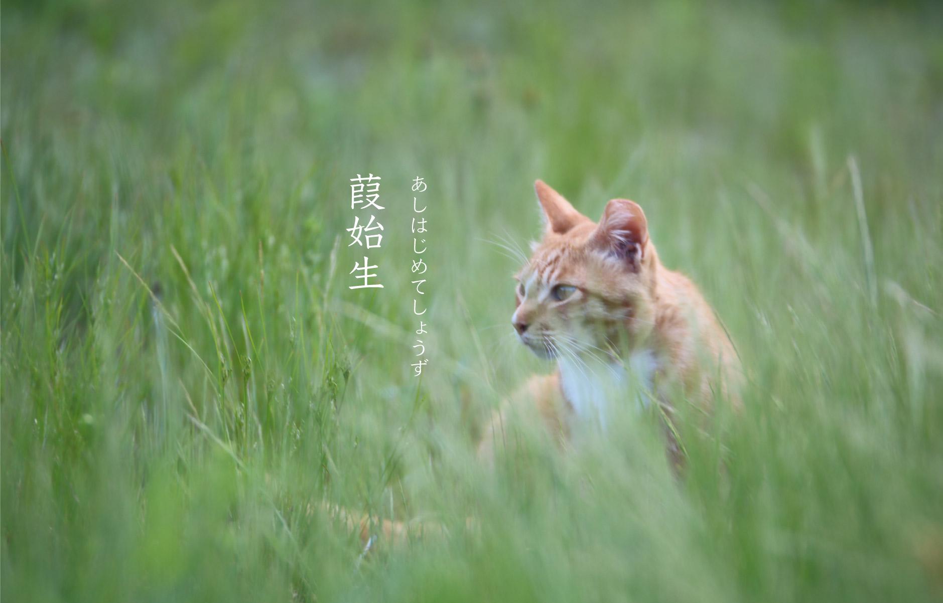 猫と葭始生