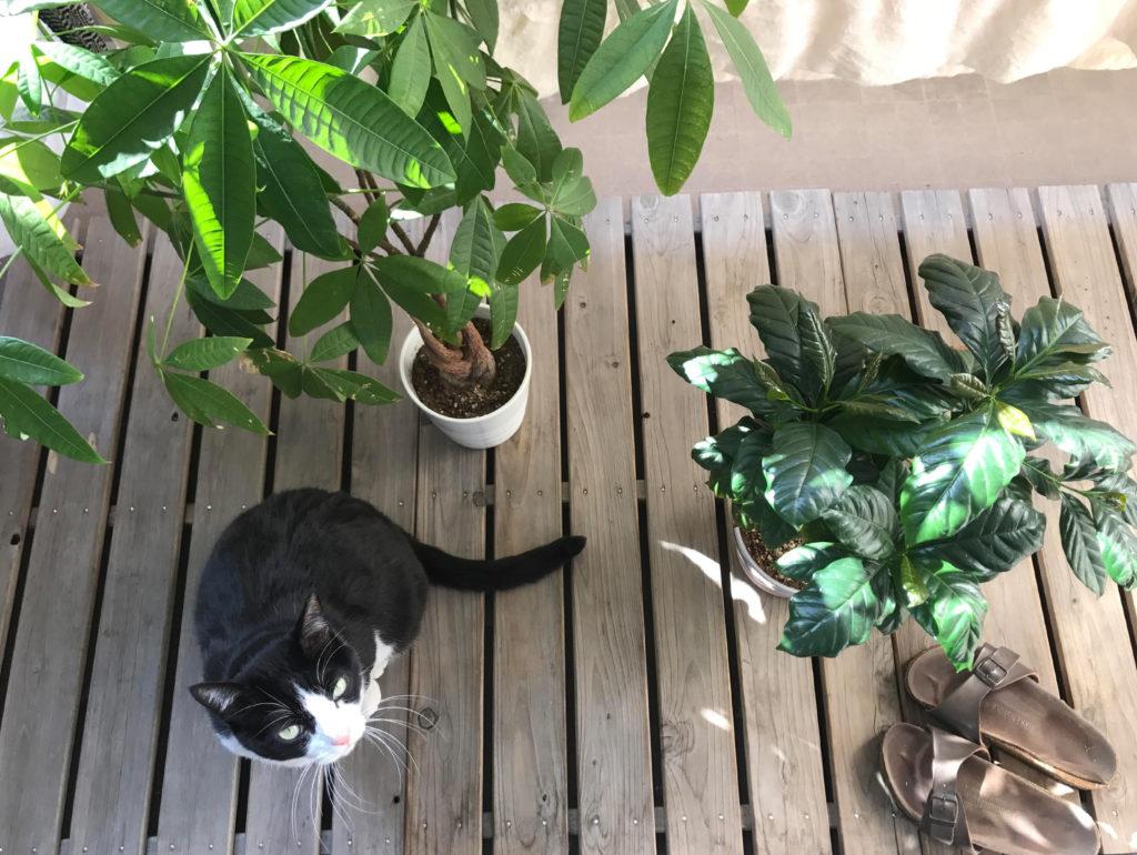 猫とベランダ