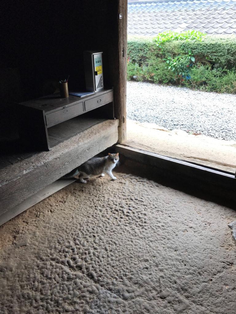 大分の最古の民家後藤家住宅の土間にいた猫