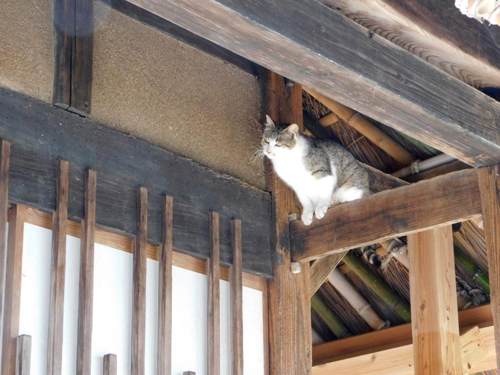 大分市後藤家住宅にいた猫