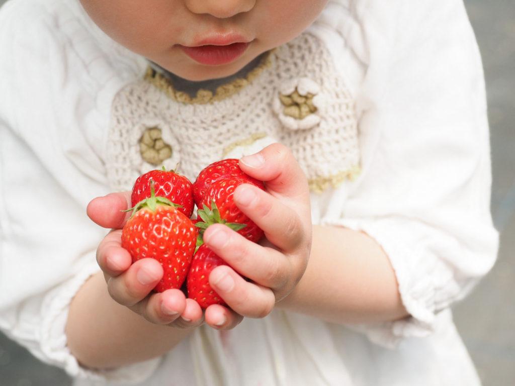 子供が持った苺