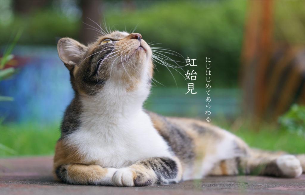 猫と虹始見