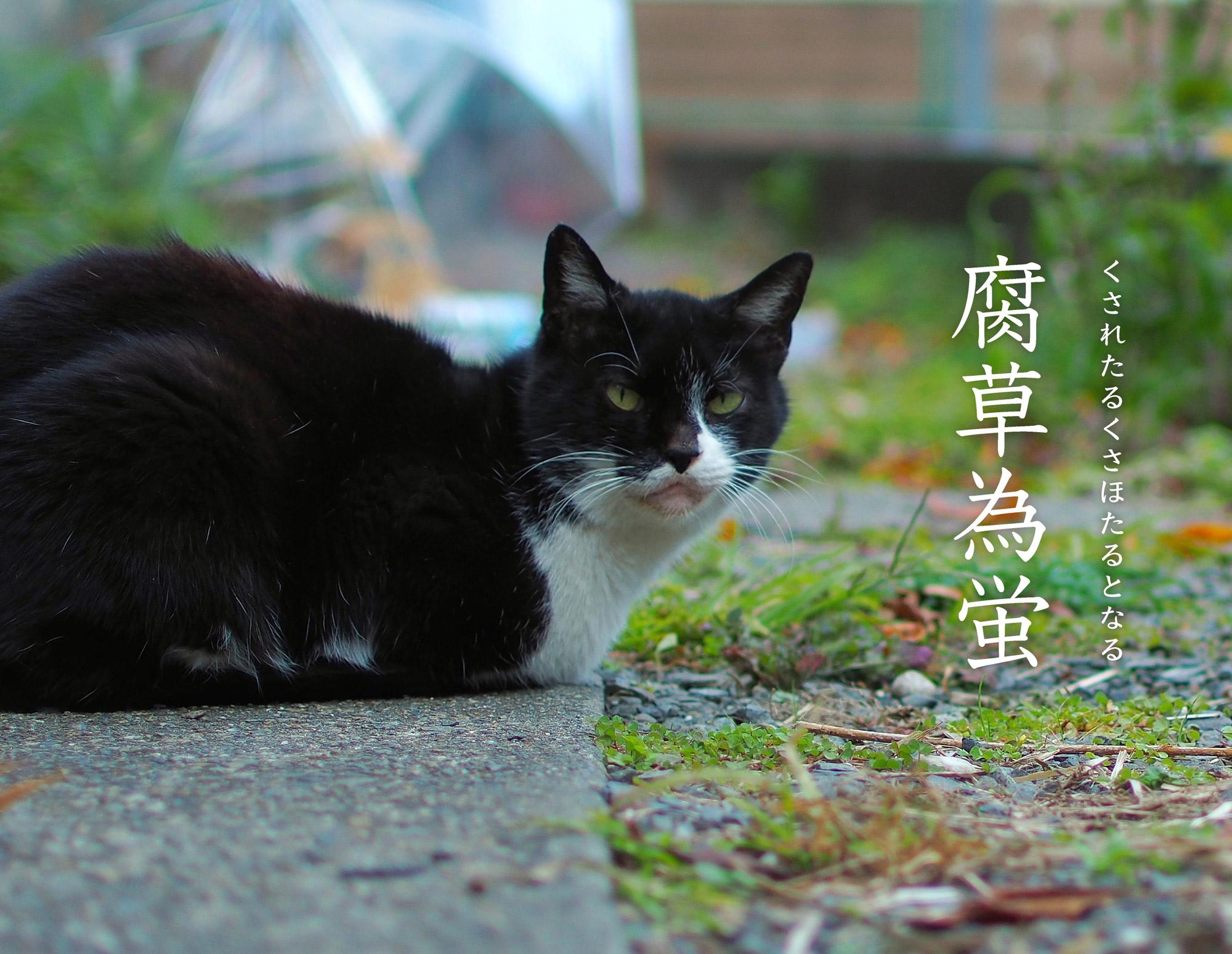腐草為蛍と猫