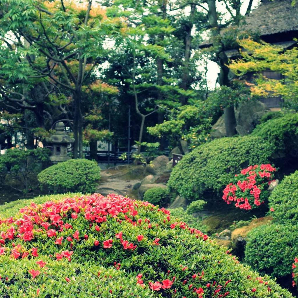 さつきが咲いた日本庭園