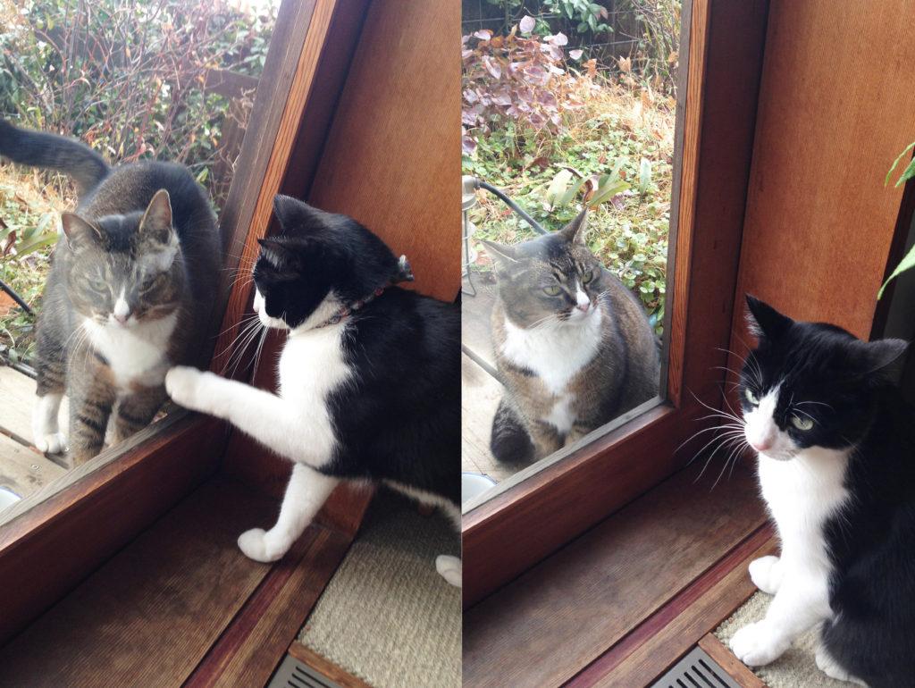 外猫が気になる家猫
