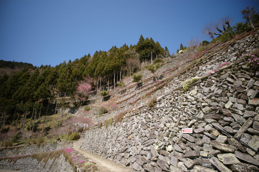 芝桜が綺麗な高開の石積み