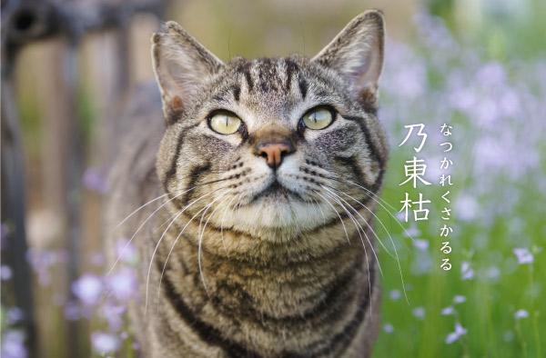 乃東枯と猫