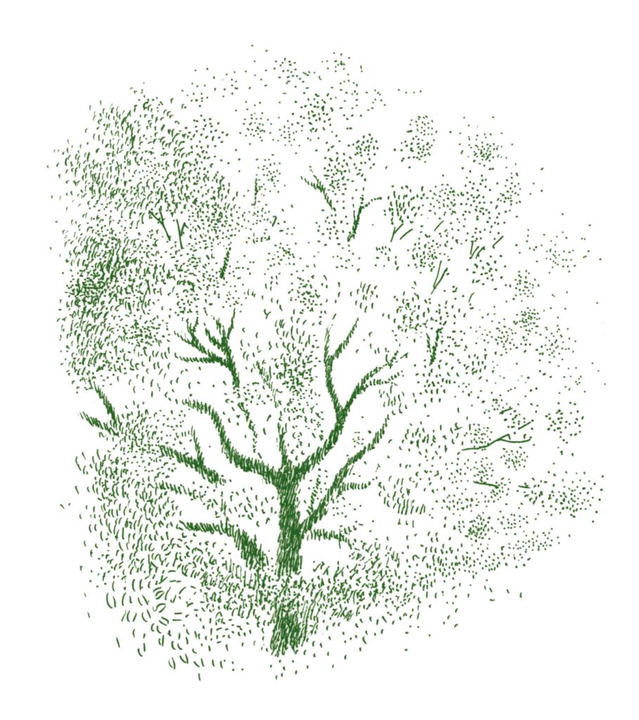 怪しげに風に揺れる楠の大木
