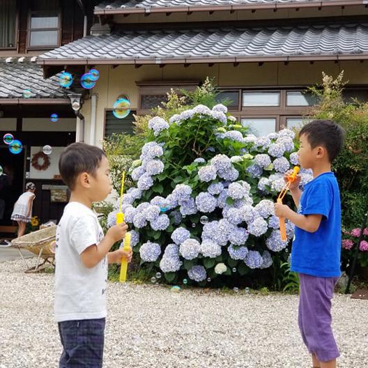 アジサイとシャボン玉で遊ぶ子供