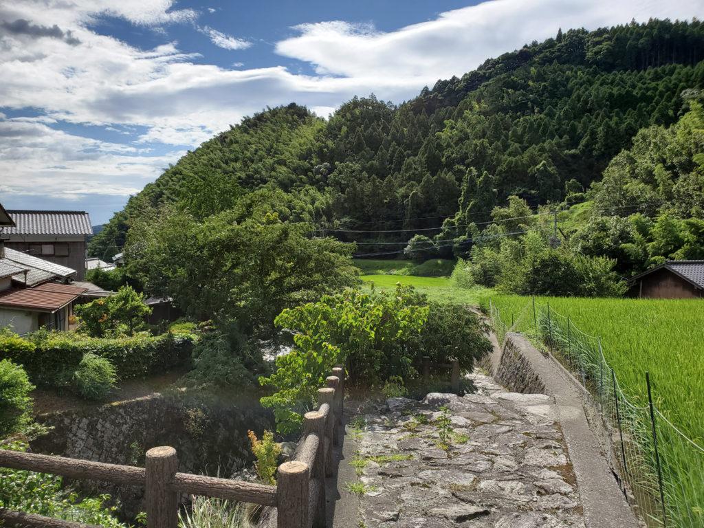 野鳥川と田んぼ