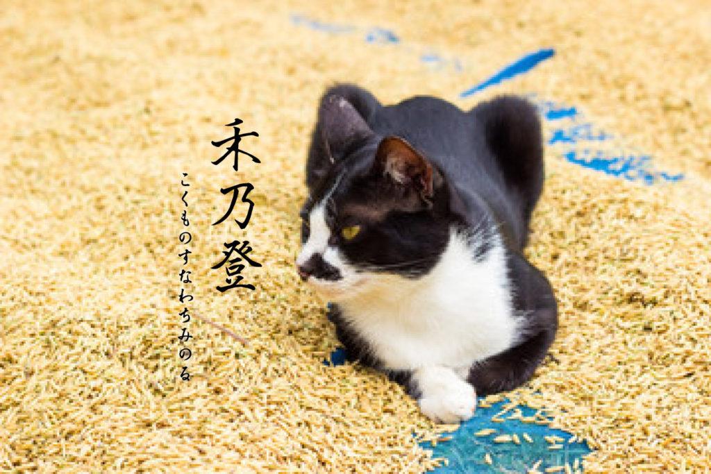 禾乃登と猫