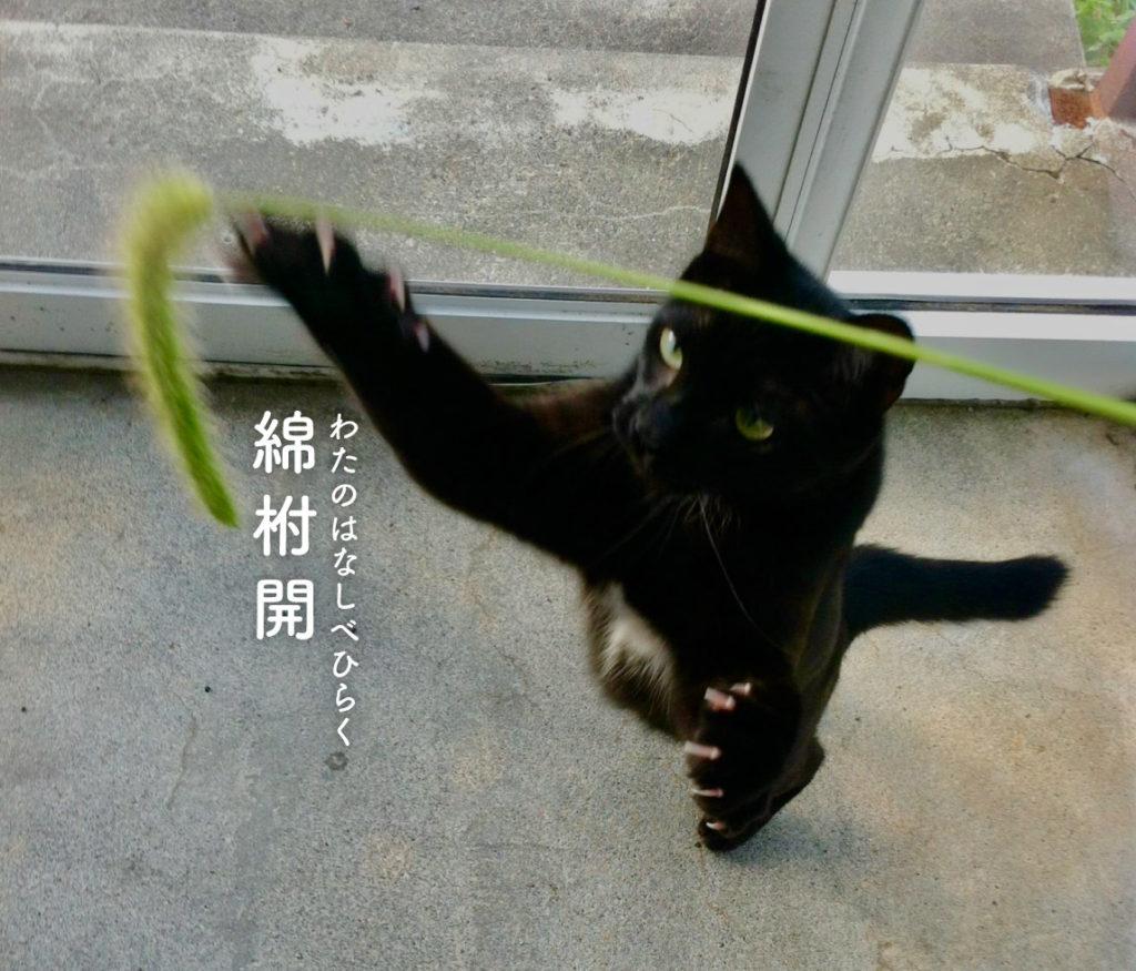 綿柎開と猫